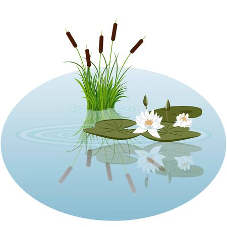 White water lily and reeds in water vector illustration