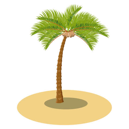 Vector coconut palm tree on the sand. Illustration for tropical cartoon props