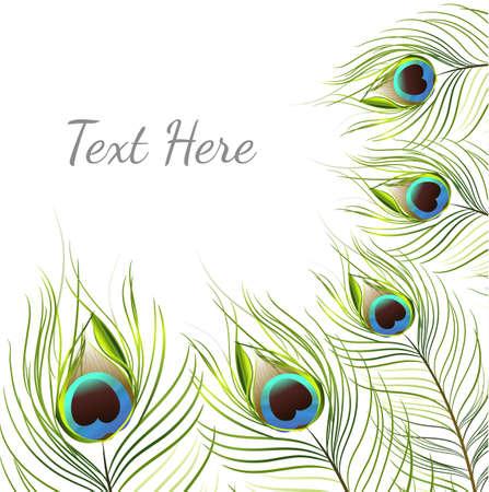 vector peacock on white background.vector illustration