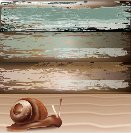 gastropod: Snail on sand with wood background