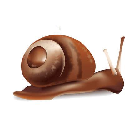 gastropod: Snail vector illustration on white background