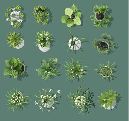 Set of tree top symbols for architectural or landscape design for map vector Illustration