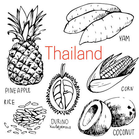 yam: Hand-drawn food in Thailand: yam, durino, cocounut, pineapple, corn, rice