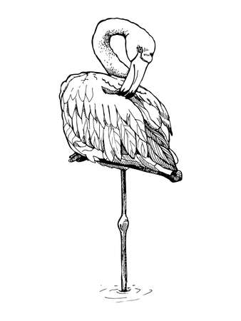curved leg: Hand-drawn sketch of a flamingo. Flamingo stands on one leg with a curved neck. Illustration