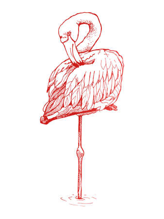 free hand: Hand-drawn sketch of a flamingo. Flamingo stands on one leg with a curved neck. Illustration