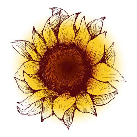 semillas de girasol: Dibujado a mano girasol. Girasol flor con el coraz�n y p�talos pintados.