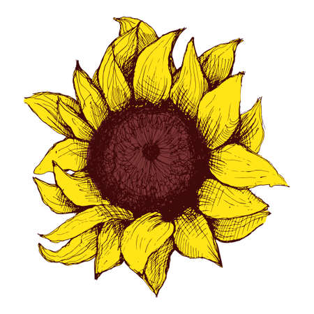 single sketch: Hand drawn sunflower. Flower sunflower with painted heart and petals.