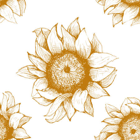 ink sketch: Hand drawn pattern of sunflowers. Flower sunflower with heart and rose. Pattern for packaging, advertising, and oil products from sunflower.