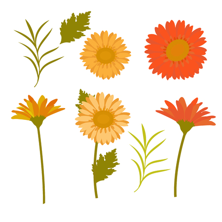 A set of gerbera flowers, red, yellow and green leaf on a white isolated background. Template for decoration of postcards, albums, posters. Vector illustration.