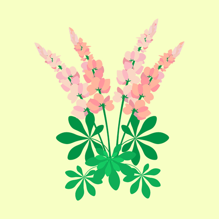 Pink lupines for the design of clothes, postcards.