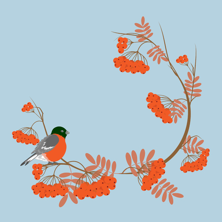 A bullfinch and ashberry branches, Christmas cute card. Vector cartoon illustration.