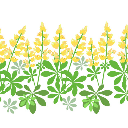 Seamless pattern with yellow lupine flowers isolated on white background, floral vector illustration.