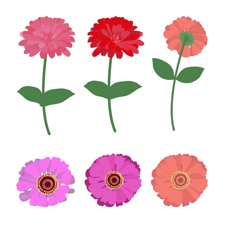 Vector illustration of gerbera, chtizantemy on white isolated background. Template for the decor of the album, postcard, poster, applique. Illustration