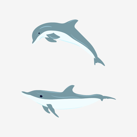 Vector illustration of dolphins on white isolated background. Template for the design of the album, poster, applique.