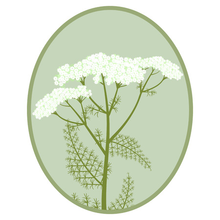 Vector illustration of a bouquet of yarrow in a frame.