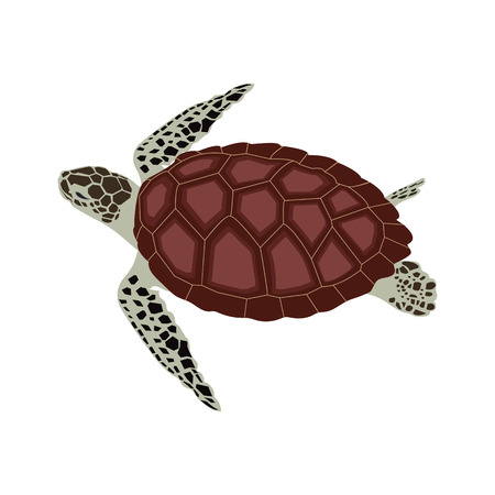 Illustrazione vettoriale di una tartaruga marina. Modello per la progettazione di album, logo, etichetta, web design.