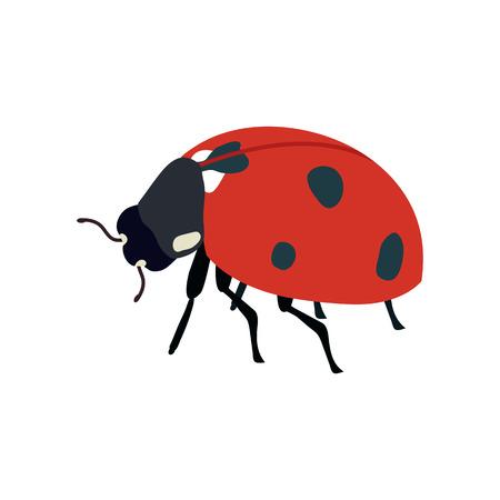 Vector illustratie. Lieveheersbeestje op witte geïsoleerde achtergrond. Sjabloon voor het ontwerp van het pictogram, het logo, de poster, de briefkaart.