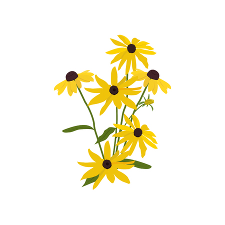 Vector illustration of flowers Rudbeckia on white isolated background. Template for postcard, poster, logo, design of cosmetics. Logo