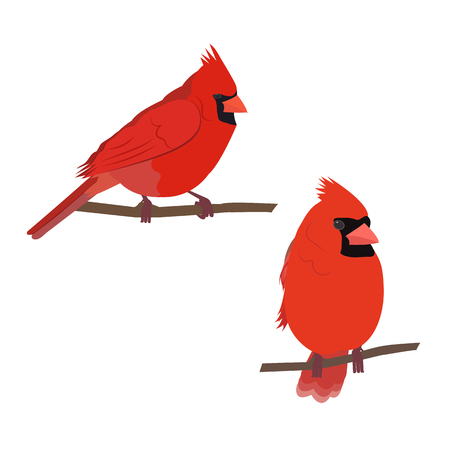 Vector illustration of a cardinal bird on white isolated background. Template for postcards, icons, logo, web design. Vettoriali
