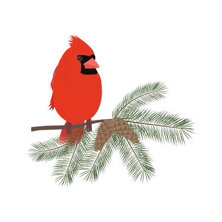 Vector Christmas illustration with bird cardinal sitting on fir branches on white isolated background. Template for postcard, poster, web design. Illustration