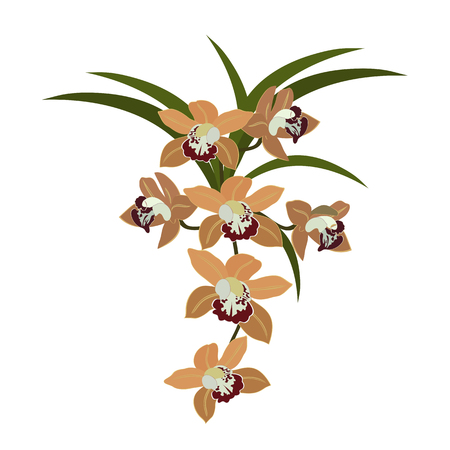 Vector illustration of a tropical orchid on white isolated background. Template for postcard, poster, web design. Stock Illustratie