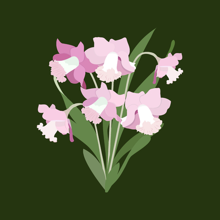 Vector illustration of pink daffodils on a dark background. Is isolated. Template for postcard, poster, web design. Stock Illustratie