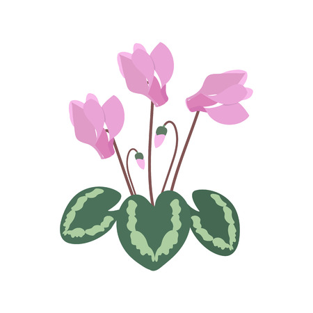 Vector illustration with cyclamen on a white isolated background. Template for postcard, cover, web design. Illustration