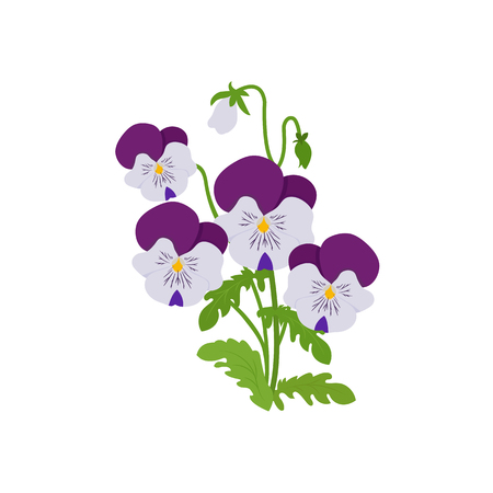 Vector illustration. Bouquet of pansies on a white isolated background. Template for greeting cards, web design.