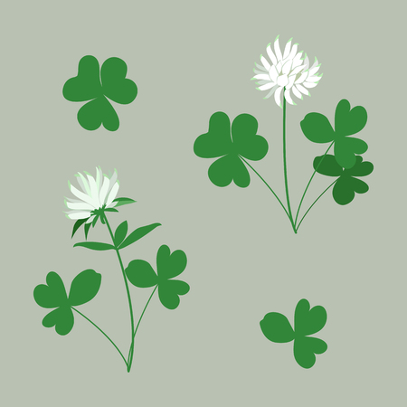 White Clover - Trifolium.Hand drawn vector illustration of a white clover flower and leaves on isolated background.
