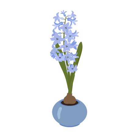 Vector illustration of a garden flower. Hyacinth in a pot on a white isolated background. Template for postcard, poster, web design.