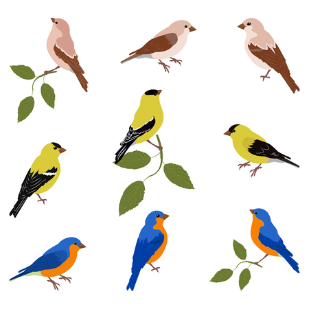 A vector illustration of a set of birds:eopsaltria, Chinese blue flycatcher, oriole on a white isolated background. Template for greeting cards, web design.