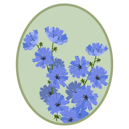 Vector illustration of chicory in a frame. Design for natural cosmetics, health products, isolated on white background.