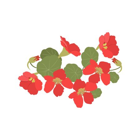 Vector illustration of garden nasturtium. Beautiful botanical flowers on an isolated white background. For decorating postcard, poster, web design. Stock Illustratie