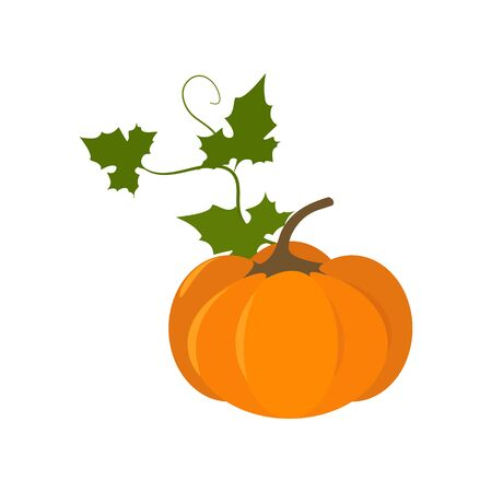 Vector illustration. Pumpkin on a white isolated background. To decorate Happy Thanksgiving greeting card, web design. Stock Illustratie