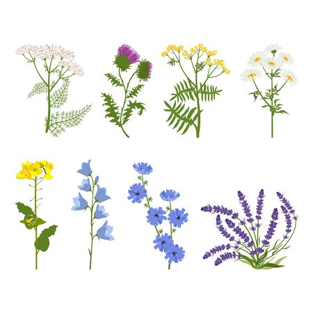 Set of wildflowers and herbs on a white isolated background. Vector illustration. For decorating herbal packaging, web design.