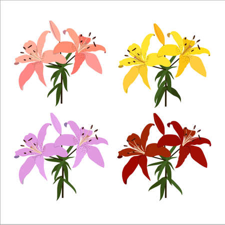 Colorful of lilies flower isolated on white background. Vector set of blooming floral for your design. Adornment for wedding invitations and greeting card.  イラスト・ベクター素材