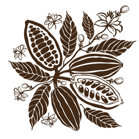 Cacao beans plant, Vector exotic cacao plants Illustration