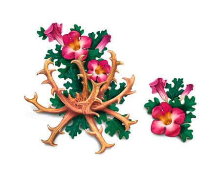 악마의 발톱 (Harpagophytum procumbens), 또는 그립 식물, 나무 거미