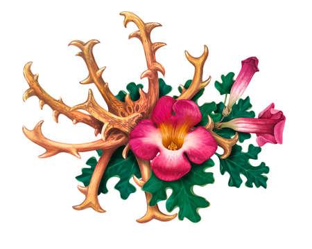 Griffe du diable (Harpagophytum procumbens), ou plante à grappin, araignée en bois
