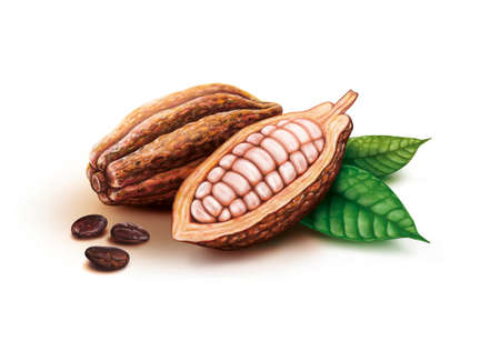 Cocoa pods, cocoa beans and leaves
