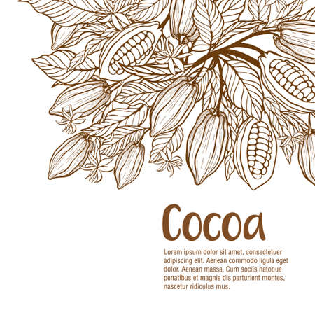 Cocoa beans illustration. Chocolate cocoa beans 矢量图像