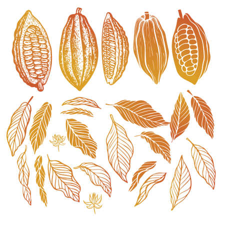 Cacao beans plant, Vector exotic cacao plants