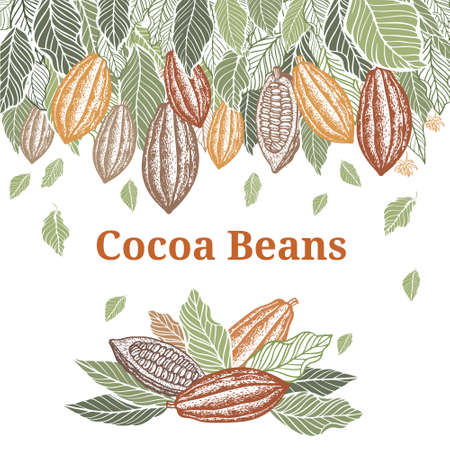Cacao beans plant, Vector exotic cacao plants Vetores