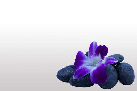vicious: flower on stone Stock Photo