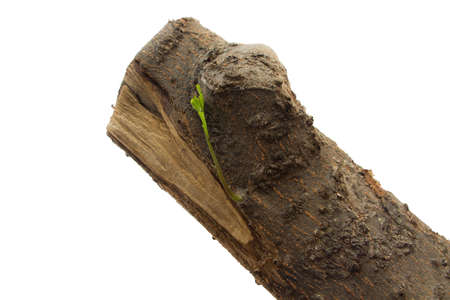 live again: trees sprouting Stock Photo