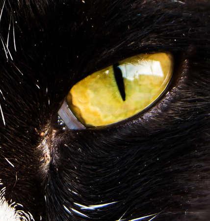 cat eye: One cat eyes