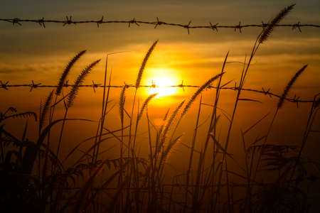 Flower grass dog tail Swaying And the sun that appears in orange