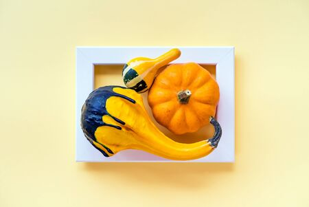 Creative layout of autumn pumpkins with yellow background in the frame. Creative seasonal concept