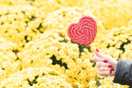 Female hand with beautiful red manicure holds a big red heart-shaped lollipop on a background of yellow autumn flowers