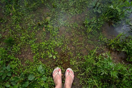 Female tanned legs in rubber slates with red varnish pedicure standing in the water with grass. Summer vacation concept